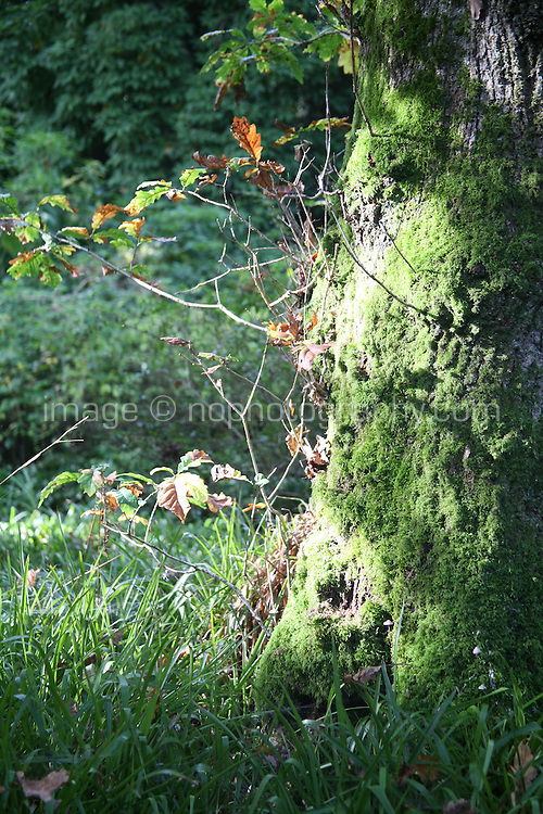 Autumn leaves and a moss covered tree trunk  in Wicklow Ireland