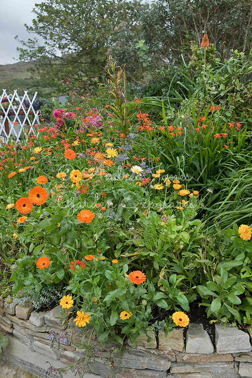 Raised stone bed with Calendula officinalis (marigold), Borago officinalis (borage) and Crocosmia at Father McDyer Terrace, Glencolmkille, Co. Donegal, Ireland