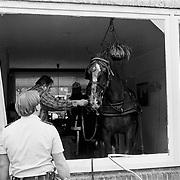 Ongeval paard in woonkamer A. Dortsmanplein Naarden