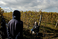 Canada, Ontario, Colchester. October 2010. Late in the harvest at CEV. Maybe a week left. Today they harvest villain noir, a less expensive grape. Start looking towards family and friend relationships and getting away from what the people do.