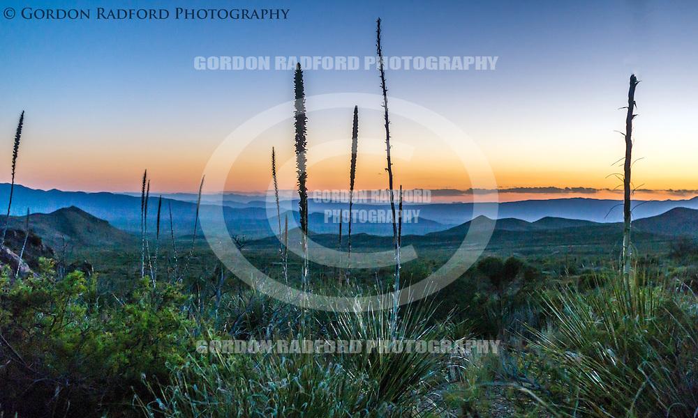 Pre-dawn light at Big Bend National Park near Terlingua, Texas.