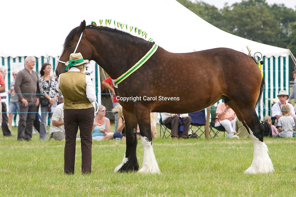 Heavy Horses at the Weeton Show 2011