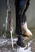 Wassen<br /> Veiling Dutch Sport Horse Sale 2013<br /> © DigiShots