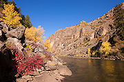 The Gunnison River in Colorado flows into a narrow gorge lined by trees displaying their fall colors. The Gunnison River is the fifth largest tributary of the Colorado River.