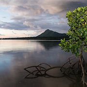 Mangroves in the West Coast of Mauritius with a view of Tourelle du Tamarin mountain. The coastal forest of Mauritius has been heavily impacted by tourism and development, but a few regions still have mangroves.