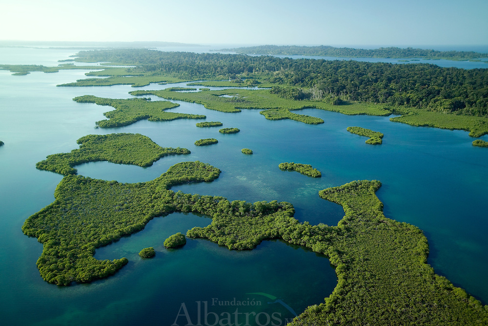 Bocas del Toro es una provincia de Panam&aacute; y su capital es la ciudad hom&oacute;nima de Bocas del Toro. Tiene una extensi&oacute;n de 4 643,9 km?, una poblaci&oacute;n de 125,461 habitantes (2010)1 y sus l&iacute;mites: al norte con el mar Caribe, al sur con la provincia de Chiriqu&iacute;, al este y sureste con la comarca Ng&auml;be-Bugl&eacute;, al oeste y noroeste con la provincia de Lim&oacute;n de Costa Rica; y al suroeste con la provincia de Puntarenas de Costa Rica. La provincia incluye la isla Escudo de Veraguas que se encuentra en el golfo de los Mosquitos y separada del resto por la pen&iacute;nsula Valiente.<br /> <br /> En la provincia de Bocas del Toro, la geograf&iacute;a y la cultura han influido las relaciones de producci&oacute;n: agr&iacute;colas en tierra firme (Changuinola, Almirante, Guabito y Chiriqu&iacute; Grande) con poblaci&oacute;n mayoritariamente ind&iacute;gena y cuyo principal cultivo es el banano que registra un gran aporte al pa&iacute;s en cuanto a exportaci&oacute;n, principalmente a los Estados Unidos y Europa; y tur&iacute;stica - de servicios en el archipi&eacute;lago (Bastimentos y Bocas Isla tambi&eacute;n llamada Isla Col&oacute;n) con poblaci&oacute;n latina -afroantillana, cuya econom&iacute;a se basa en el turismo, los servicios y la pesca.<br /> <br /> Bocas del Toro es un mosaico de culturas: espa&ntilde;ola, ind&iacute;gena, inmigrantes afro-antillanos de las Indias Occidentales en su mayor&iacute;a ingl&eacute;s y franco parlantes, alemanes y norteamericanos, todos han sido parte del desarrollo de la regi&oacute;n.<br /> <br /> Los principales bailes folkl&oacute;ricos son los de origen afro-antillano e ind&iacute;gena. Los bailes como calidonia , polca y cuadrilla antillana se bailan con vestidos de sal&oacute;n y los bailes como calipso, congas y Palo de Mayo con atuendos afro-antillanos.<br /> <br /> <br /> <br /> &copy;Alejandro Balaguer/Fundaci&oacute;n Albatros Media.