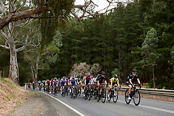 The bunch charge into Kangarzilla on Stage 1 of 2020 Santos Women's Tour Down Under, a 116.3 km road race from Hahndorf to Macclesfield, Australia on January 16, 2020. Photo by Sean Robinson/velofocus.com