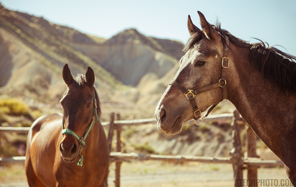 Two horses in a corral at a ranch in the Tabernas desert, Almeria province, Andalucia, Spain.
