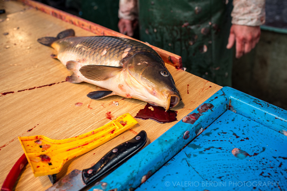 Once the fish is dead a long procedure to get the clean fillets begins. Scaling is the first step.