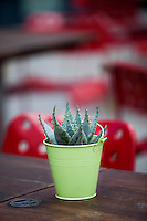 Close-up of succulent plant on wooden table
