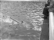 03/09/1955<br />