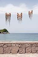 Octopus hanging to dry in the sun, Skala Skamnias, Lesbos Island, Greece