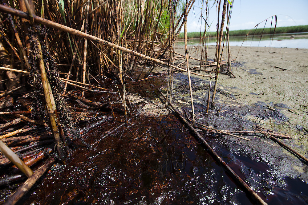 July 14, 2010,  OIl in the grass following the BP oil spill, on a barrier island in Plaquemines Parish .