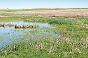 Plowed field bordering prairie pothole, south central North Dakota