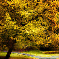 Golden foliage on a tree