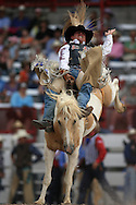 Bareback Bronc Rider Ryan Gray scores a 75 while weathering Sandstorm, 25 Jul 2007, Cheyenne Frontier Days