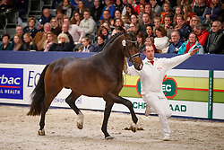 410, Kingly-Utopia<br /> KWPN Stallionshow - 's Hertogenbosch 2018<br /> © Hippo Foto - Dirk Caremans<br /> 03/02/2018