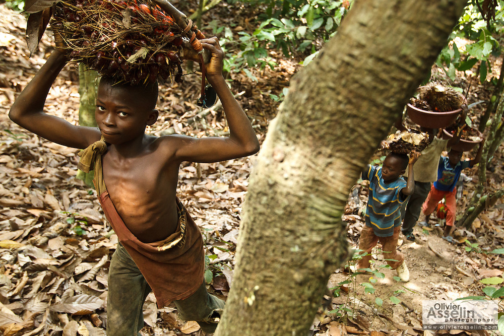Firimin Kouassi, 13, (L) and some cousins and friends carry palm nuts on their Firimin's uncle's cocoa plantation near the town of Moussadougou, Bas-Sassandra region, Cote d'Ivoire on Monday March 5, 2012. Firimin decided to stop going to school.