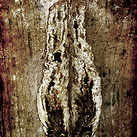 A seed pod photographed against wood. Textures added in photoshop afterwards.