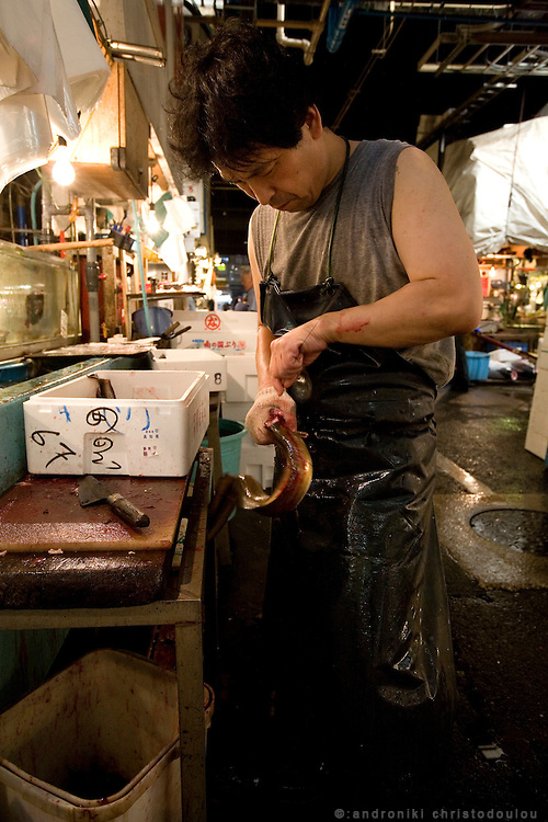 Clearing eel off their bones. Tsukiji fish market  is the biggest wholesale fish and seafood market in the world and also one of the largest wholesale food markets of any kind. The market is located in Tsukiji in central Tokyo, and is a major attraction for foreign visitors.