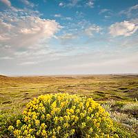 missouri river country, montana, usa, summer, montana high plains, eastern montana, prairie,