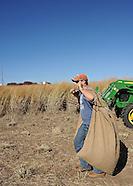 switchgrass Harvesting