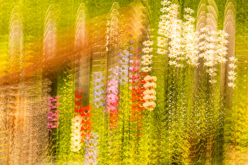 Multiple exposure tilt of garden flowers at the Hotel Alyeska in Girdwood in Southcentral Alaska. Summer. Morning.