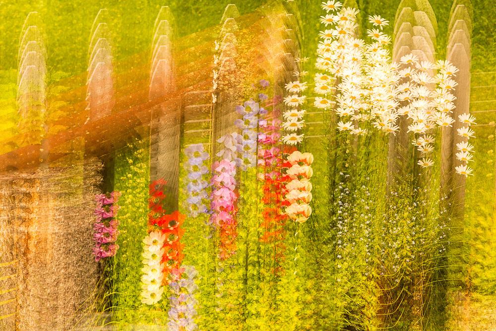 Multiple exposure tilt of garden flowers at the Hotel Alyeska in Girdwood in Southcentral Alaska. Summer. Morning.
