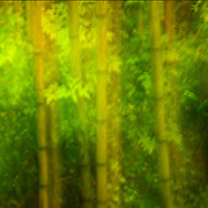 etherial image of bamboo and leaves in forest