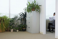 Potted plants by office window business man using laptop in adjoining room back view