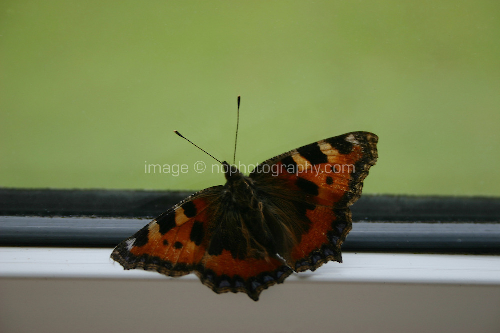 Butterfly against window pane