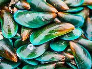 20 JUNE 2014 - SAMUT SAKHON, SAMUT SAKHON, THAILAND:  Bivalves for sale in a fish market in Samut Sakhon, Thailand.    PHOTO BY JACK KURTZ