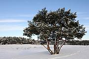 Winter in de Soesterduinen