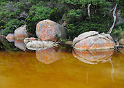 "Orange lichen and rocks reflect in the tannin-stained water of Tidal River at Wilson's Promontory National Park in the Gippsland region of Victoria, Australia. Natural tannins leached from decomposing vegetation turn the water brown. Drive two hours from Melbourne to reach Wilson's Promontory, or ""the Prom,"" which offers natural estuaries, cool fern gullies, magnificent and secluded beaches, striking rock formations, and abundant wildlife."