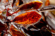 Fine art photography of ice by Eric Spangler.