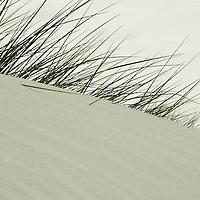 Long grass on sand dunes
