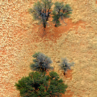 Africa, Namibia, Sossusvlei. Aerial view of Camel Thorn Acacia trees growing in the NamibRand Nature Reserve. Please be advised that this image is not sharp - the blur suggests flying as if seen from a bird in flight.