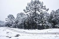 Araucárias cobertas de neve.  Urubici, Santa Catarina, Brasil. / <br /> Araucarias covered by snow.  Urubici, Santa Catarina, Brazil.
