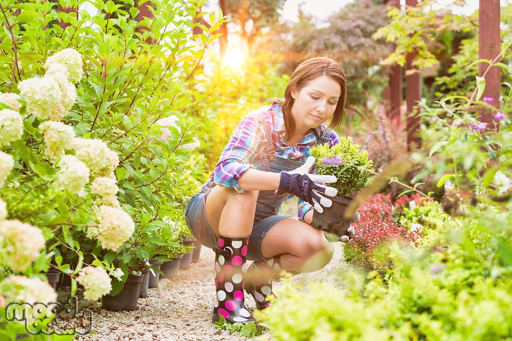 Portrait of beautiful mature gardener arranging flowers on pot in shop