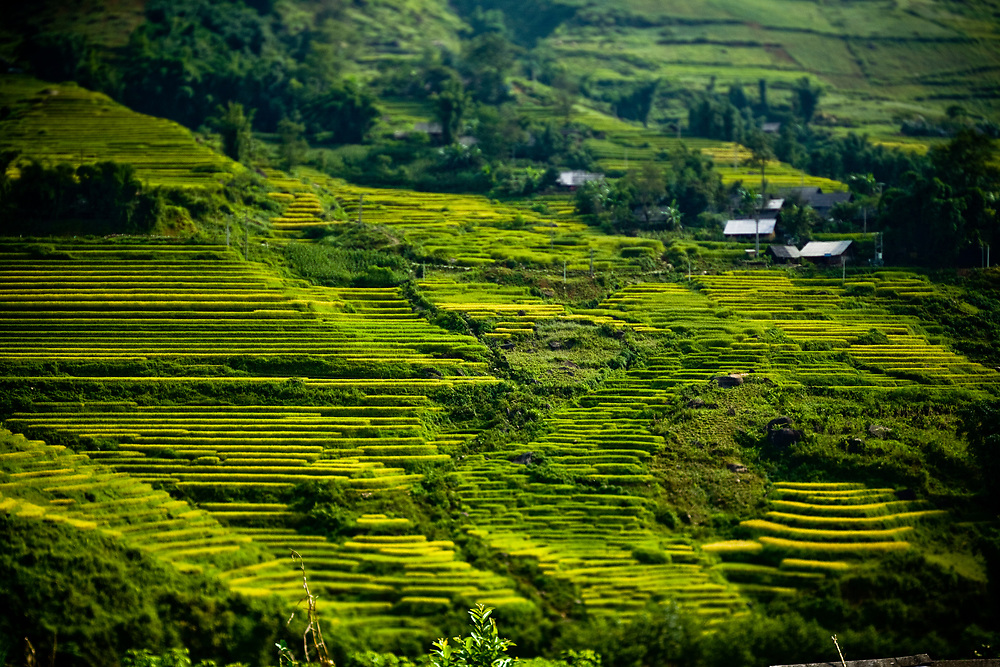 Rice terraces cover a mountainside near a small village outside of Sapa in northern Vietnam.