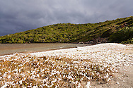 Snow in the Virgin Islands? No, this is foam (dissolved organic compounds) blown up by heavy winds across a large saltpond. The saltpond Saltpond bay is named for. Bordered on two sides by the Caribbean Sea, high winds are common in this area of St. John in Virgin Islands National Park.