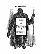 Monkeyana: Am I a Man and a Brother?'. Cartoon from 'Punch' London 18 May 1851 while controversy over Darwin's 'Origin of Species' was raging. Slogan borrowed from abolition of slavery campaign. Engraving.