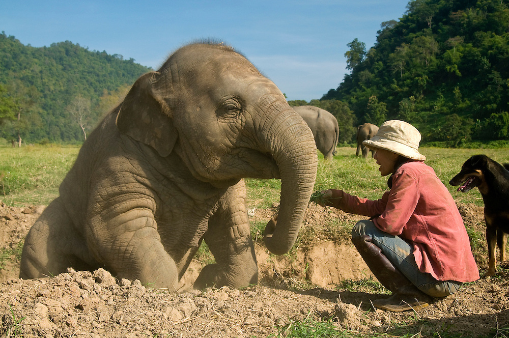 """Sangduen """"Lek"""" Chailert with baby girl, Pha Mai (New Sky) at the Elephant Nature Park near Chiang Mai, Thailand.  Sangduen """"Lek"""" Chailert founded the park as a sanctuary and rescue centre for elephants.  The park currently has 32 elephants sponsored and supported by volunteers from all over the world."""