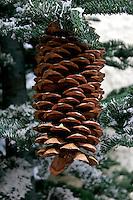 Winter Pinecone at the Bellagio Atrium, Las Vegas, Nevada