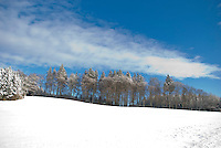 A line of trees along a snow-covered ridge, against a blue sky in wintry Switzerland.