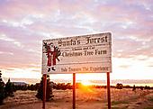 Deming - Tree Farm