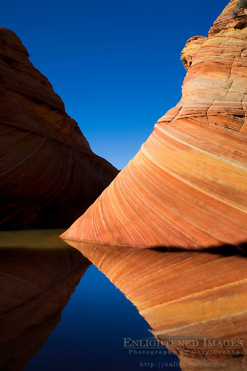 Striated sandstone reflected in seasonal pool of water at The Wave, Coyote Buttes, Paria Canyon Vermilion Cliffs Wilderness, Arizona