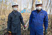 Trädfällning i ett stort område med mycket hög radioaktivitet vid byn Shidamyo. Fukushima Prefektur, Japan