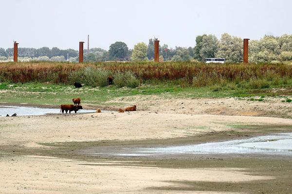 Nederland, the netherlands, Nijmegen, 15-10-2018 Door de aanhoudende droogte staat het water in de rijn, ijssel en waal extreem laag .Vandaag sneuvelde het laagterecord en is de laagste officiele stand ooit bij Lobith gemeten, 6,75 m boven NAP .  Schepen moeten minder lading innemen om niet te diep te komen . Hierdoor is het drukker in de smallere vaargeul . Door te weinig regenval in het stroomgebied van de rijn is het record verbroken .Zicht vanuit de drooggevallen inlaat van de Nevengeul, Spiegelwaal richting de rivier de Waal. Foto: Flip Franssen