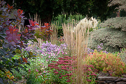 Autumn border at Pettifers with Sedum 'Autumn Joy' syn. Sedum Herbstfreude Group, Anemone x hybrida - Japanese anemone, Cotinus 'Grace' - Smoke bush, Calamagrostis × acutiflora 'Avalanche' and Euphorbia epithymoides syn. E. polychroma  - Spurge.